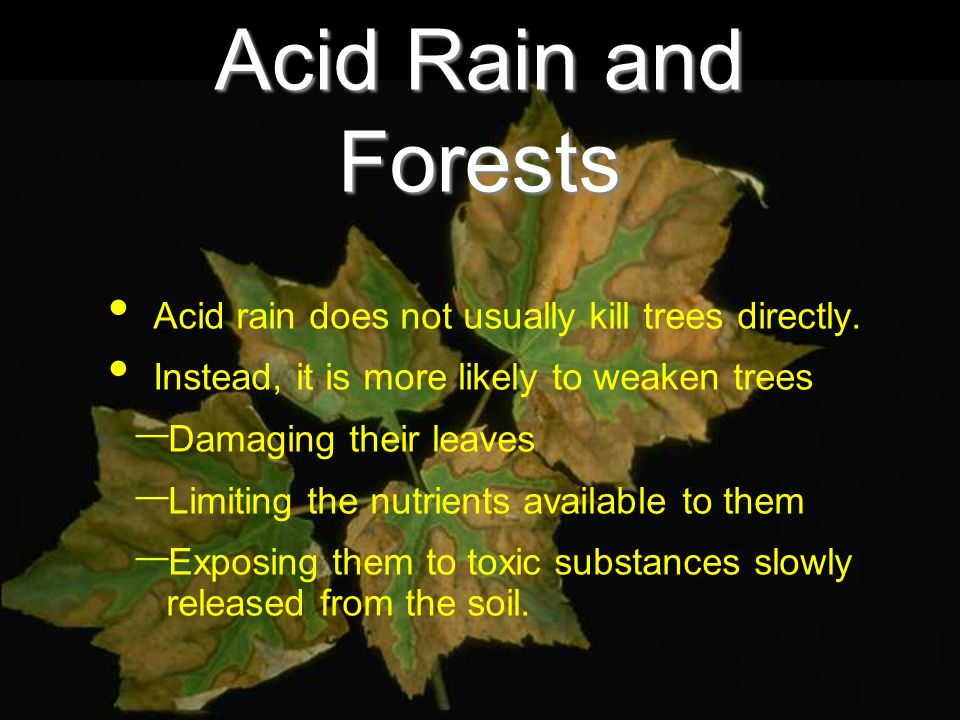 Acid Rain and Forests Acid rain does not usually kill trees directly.