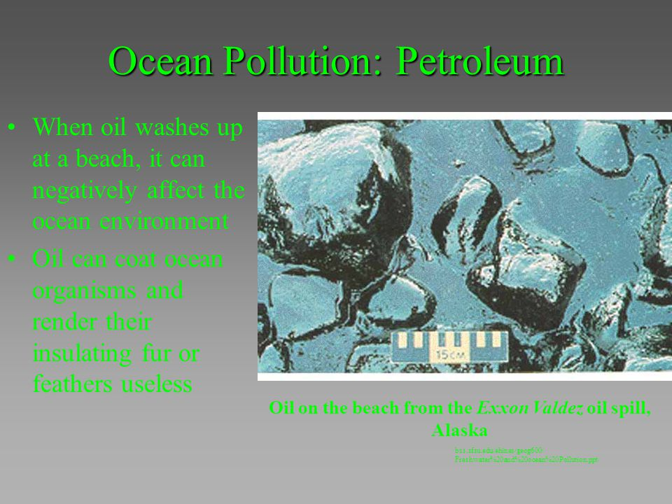 Ocean Pollution: Petroleum When oil washes up at a beach, it can negatively affect the ocean environment Oil can coat ocean organisms and render their