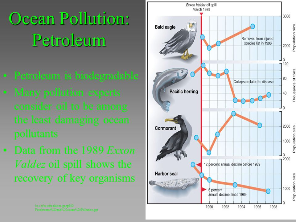 Ocean Pollution: Petroleum Petroleum is biodegradable Many pollution experts consider oil to be among the least damaging ocean pollutants Data from th