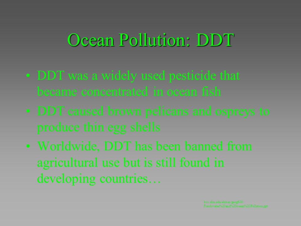 Ocean Pollution: DDT DDT was a widely used pesticide that became concentrated in ocean fish DDT caused brown pelicans and ospreys to produce thin egg