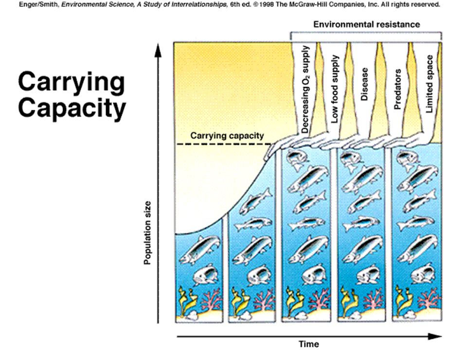 Carrying Capacity (K) Exponential curve is not realistic due to carrying capacity of area Carrying capacity is maximum number of individuals a habitat can support over a given period of time due to environmental resistance (sustainability)
