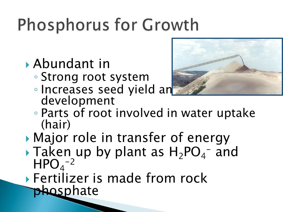  Abundant in ◦ Strong root system ◦ Increases seed yield and fruit development ◦ Parts of root involved in water uptake (hair)  Major role in transfer of energy  Taken up by plant as H 2 PO 4 - and HPO 4 -2  Fertilizer is made from rock phosphate