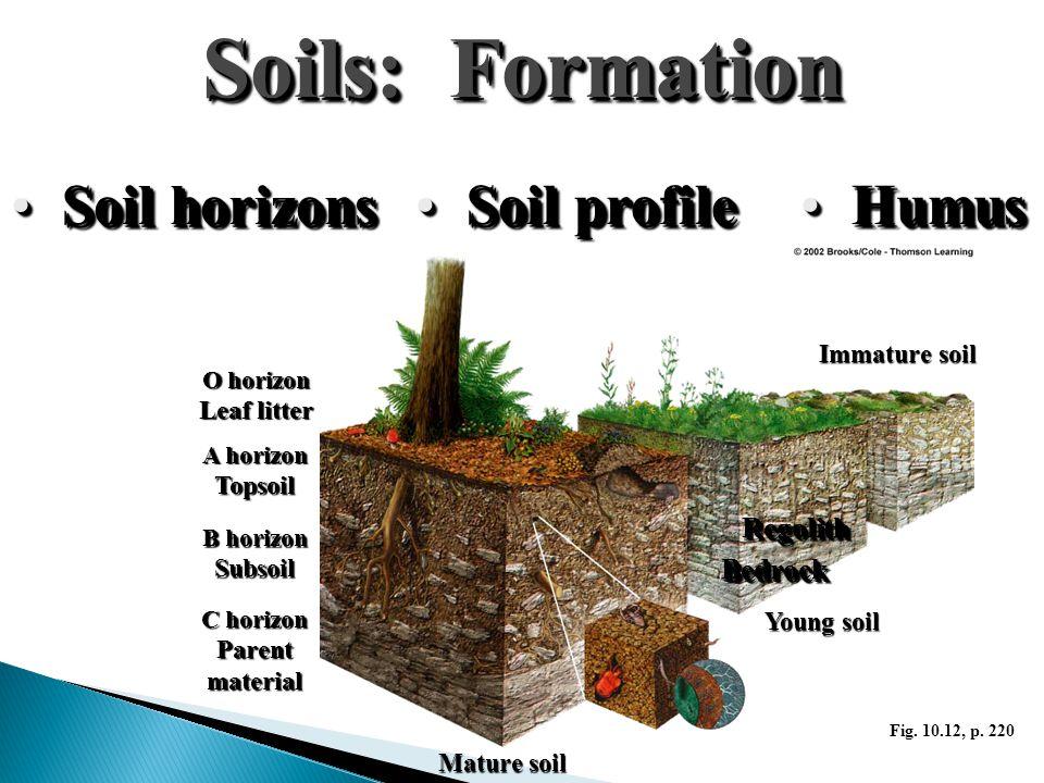 Soils: Formation Soil horizonsSoil horizons Soil profileSoil profile HumusHumus O horizon Leaf litter A horizon Topsoil B horizon Subsoil C horizon Pa