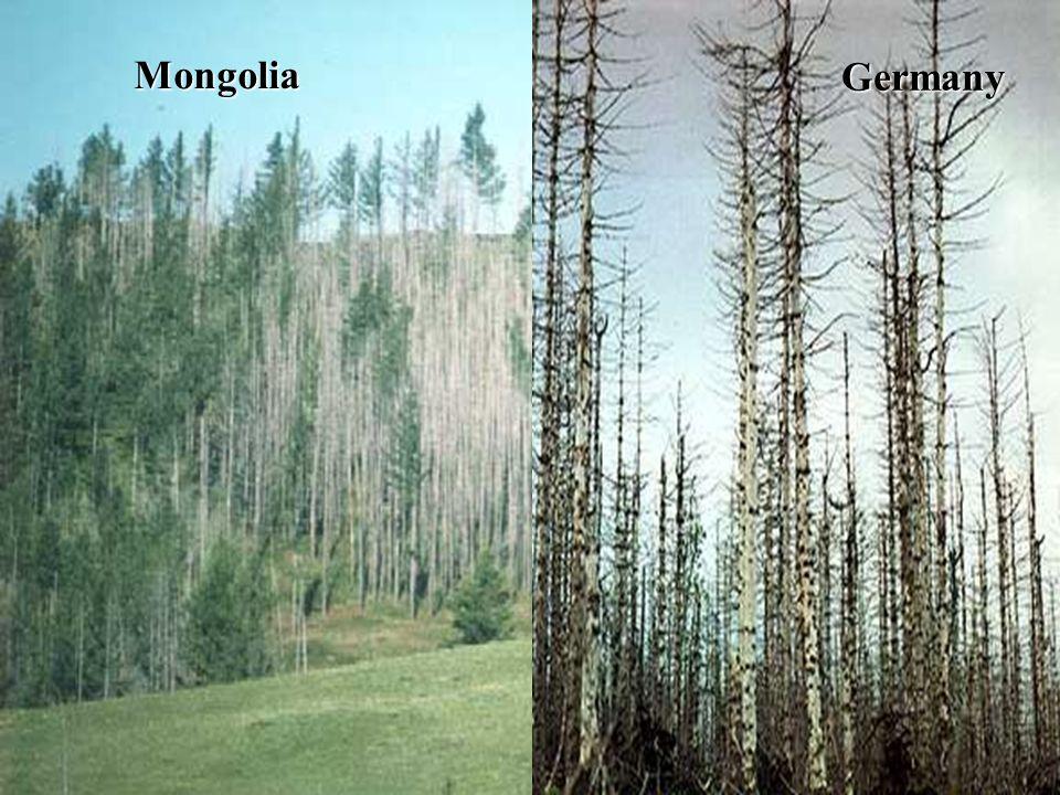 Germany Mongolia