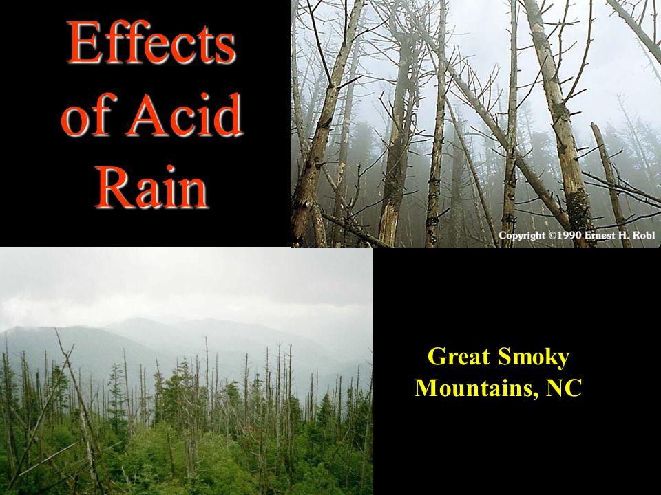 Effects of Acid Rain Great Smoky Mountains, NC