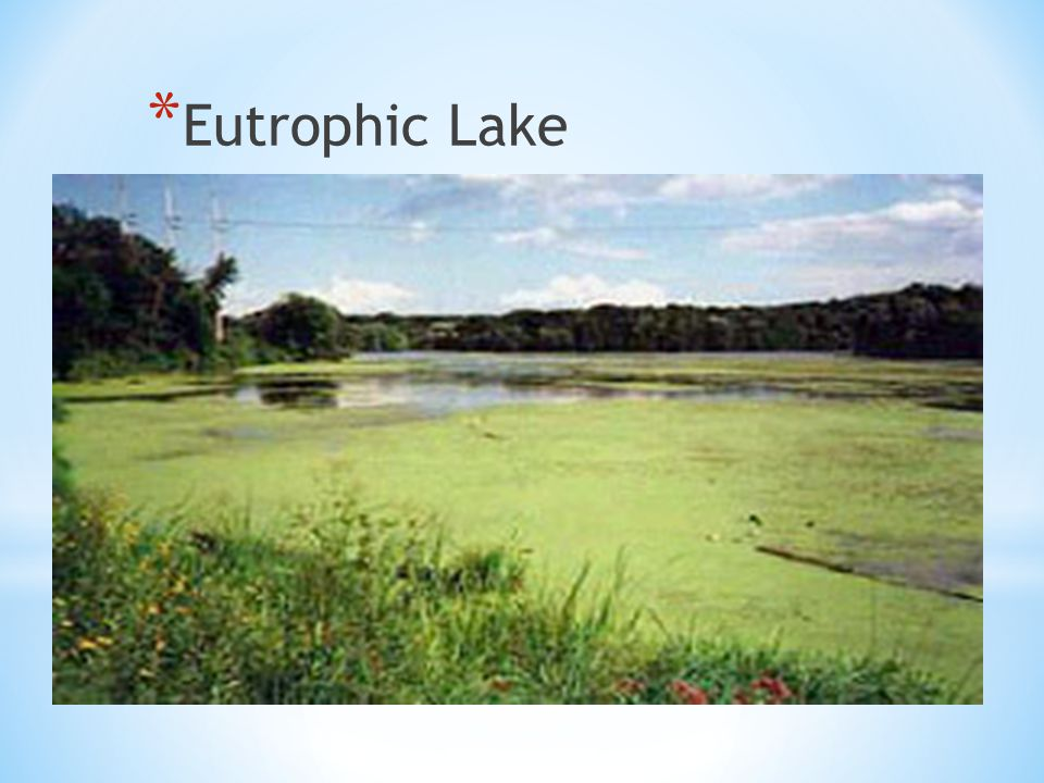 * Eutrophic Lake