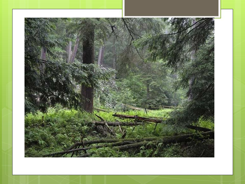Question to ponder.TThe largest area of old-growth forest in the United States is located in: A.