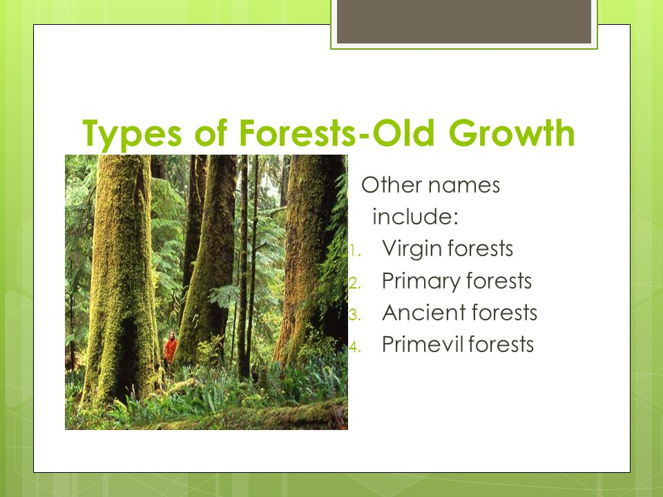 Other Names Include Virgin Forests Primary Ancient Primevil