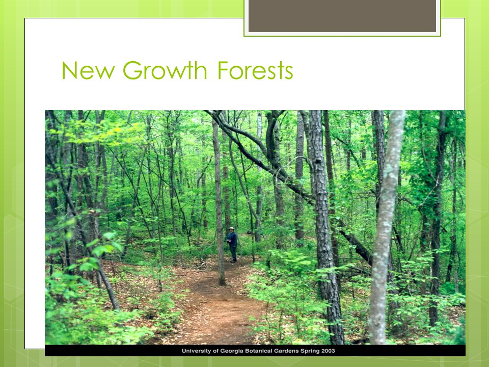 New Growth forests