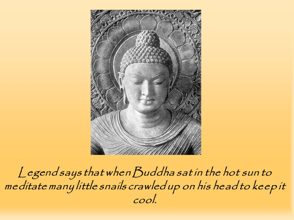 Legend says that when Buddha sat in the hot sun to meditate many little snails crawled up on his head to keep it cool.