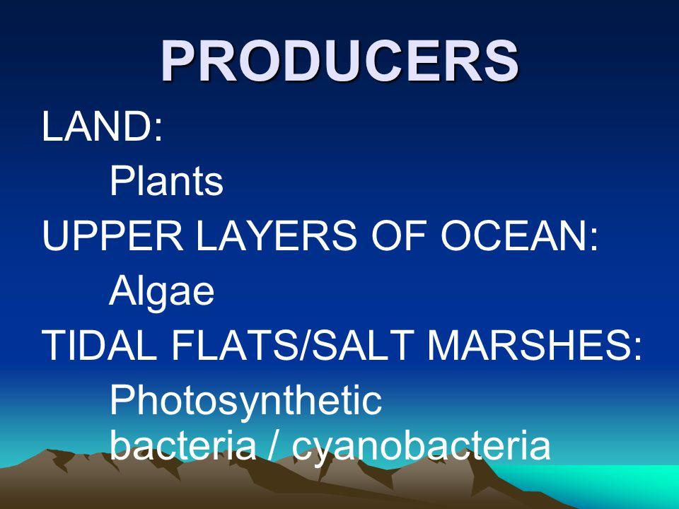 PRODUCERS LAND: Plants UPPER LAYERS OF OCEAN: Algae TIDAL FLATS/SALT MARSHES: Photosynthetic bacteria / cyanobacteria