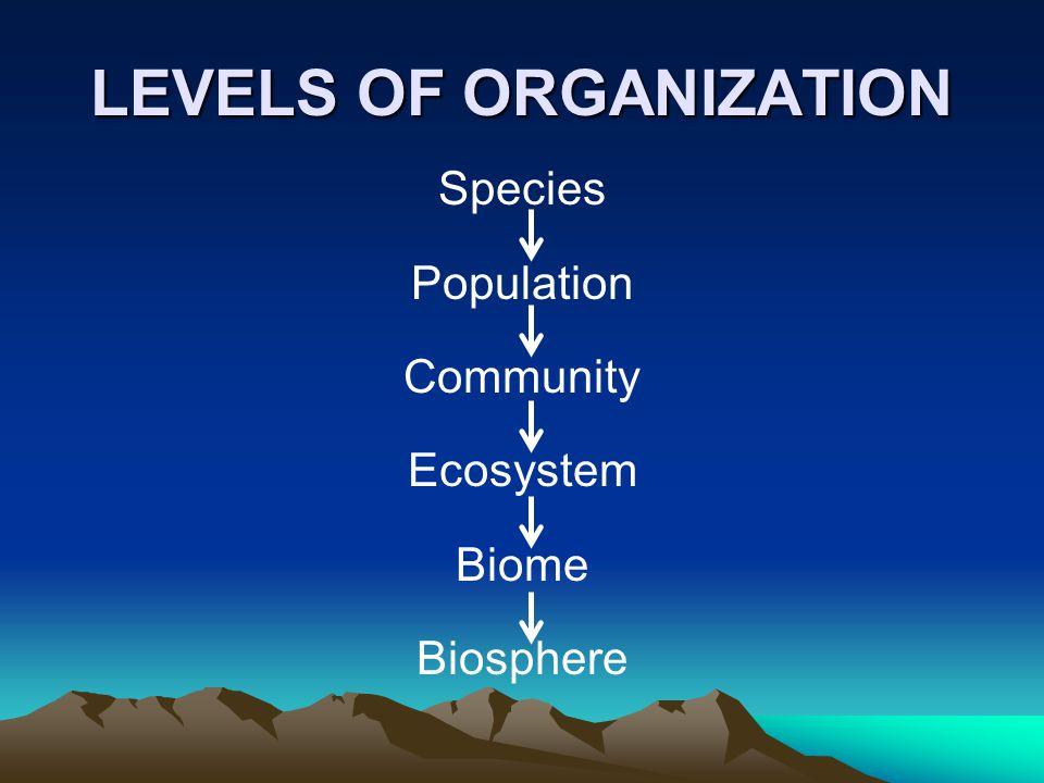 A terrestrial food chain A marine food chain
