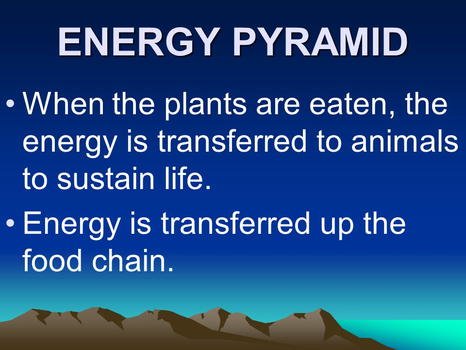 When the plants are eaten, the energy is transferred to animals to sustain life. Energy is transferred up the food chain. ENERGY PYRAMID