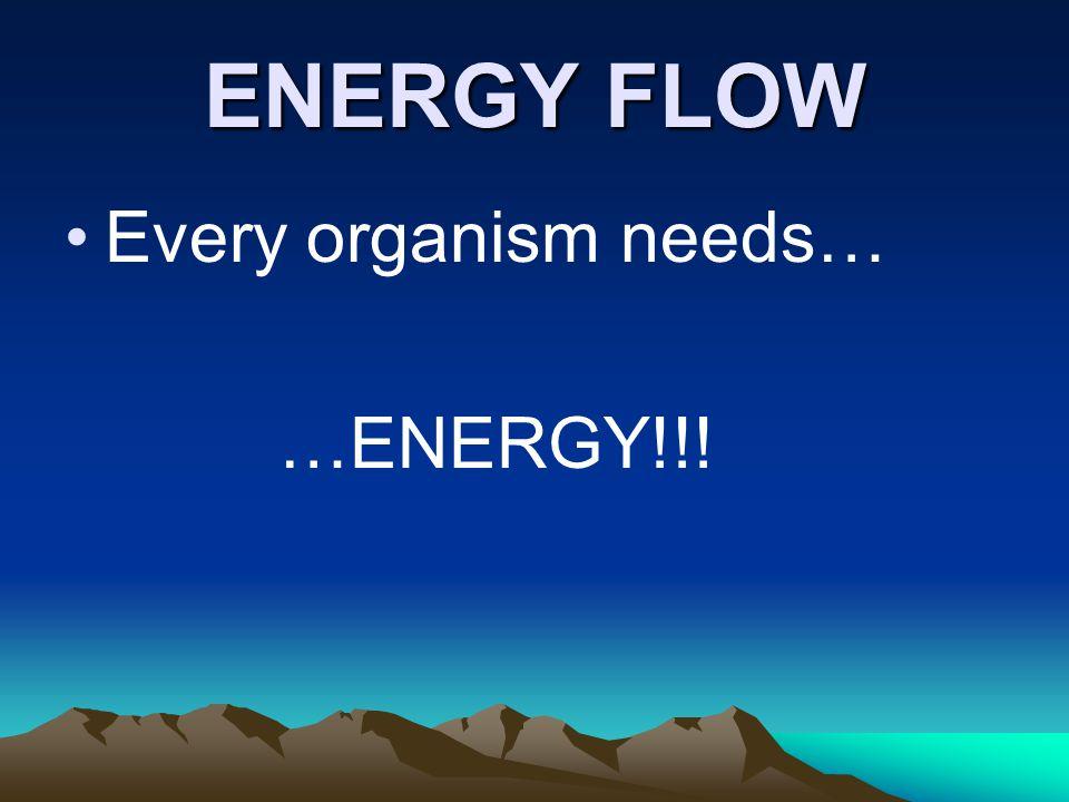 ENERGY FLOW What are autotrophs.