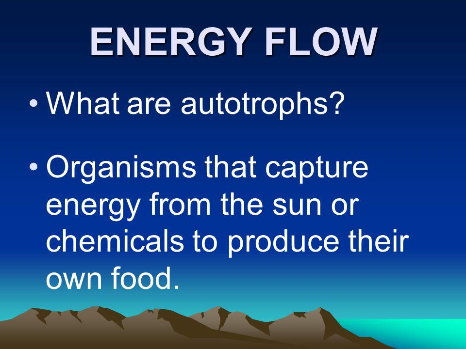 Abiotic Factors Water Air Soil Heat Light