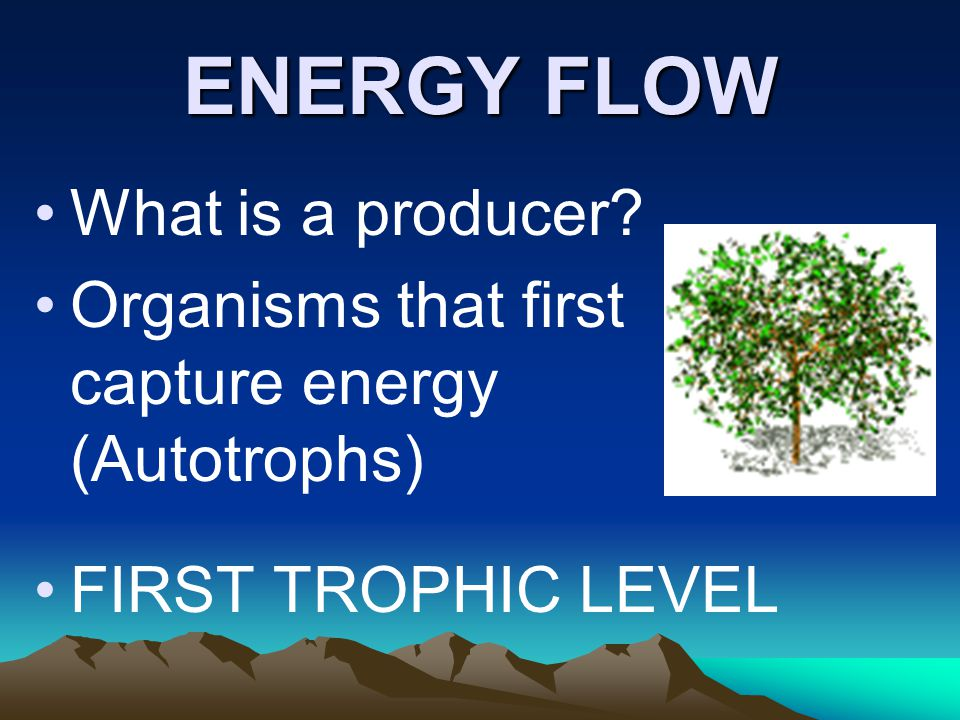 ENERGY FLOW What is a producer? Organisms that first capture energy (Autotrophs) FIRST TROPHIC LEVEL