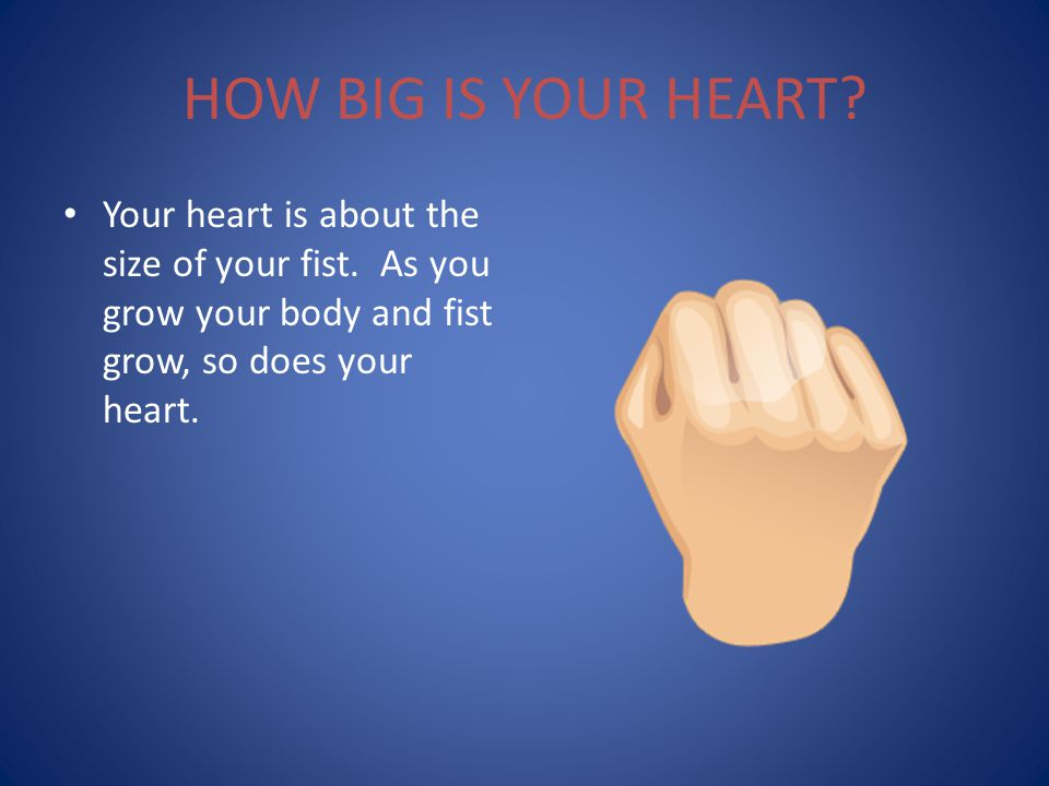 HOW BIG IS YOUR HEART.Your heart is about the size of your fist.