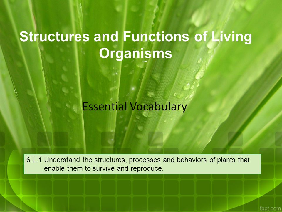 Structures and Functions of Living Organisms 6.L.1 Understand the structures, processes and behaviors of plants that enable them to survive and reprod