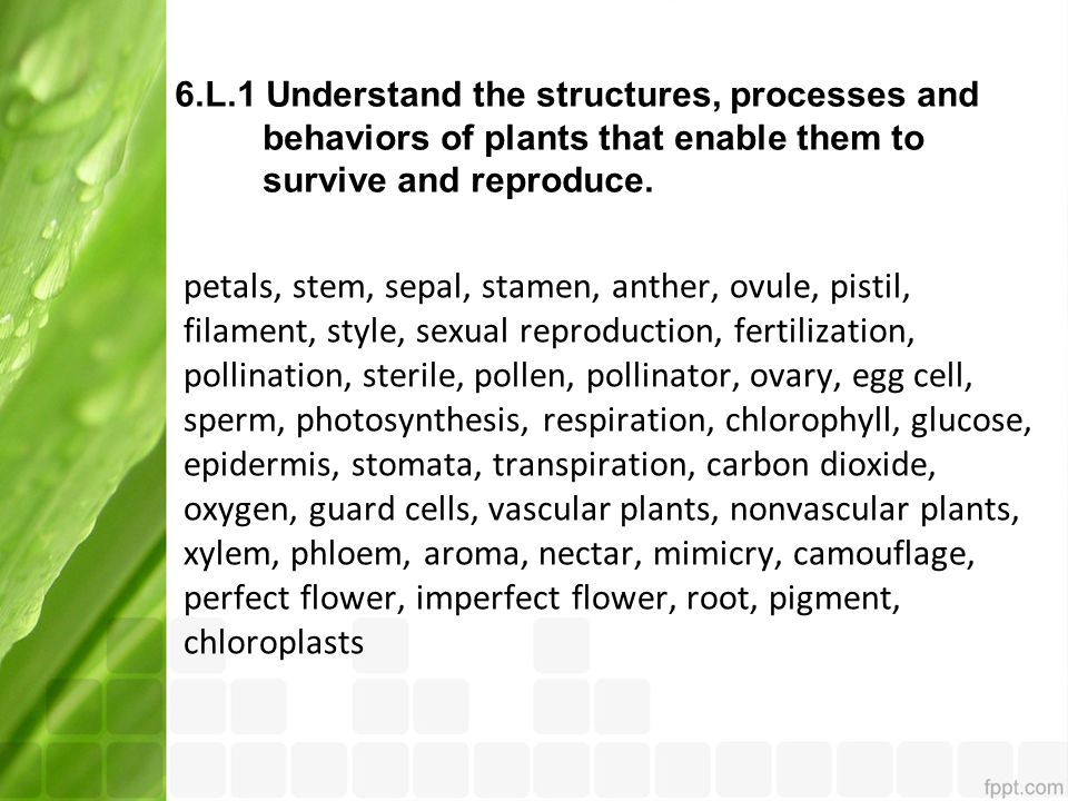 6.L.1 Understand the structures, processes and behaviors of plants that enable them to survive and reproduce. petals, stem, sepal, stamen, anther, ovu