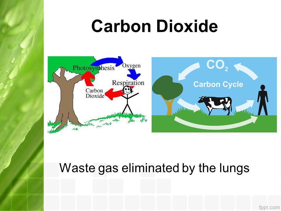 Carbon Dioxide Waste gas eliminated by the lungs