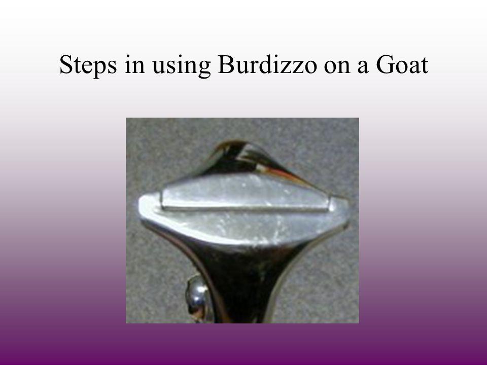 Steps in using Burdizzo on a Goat