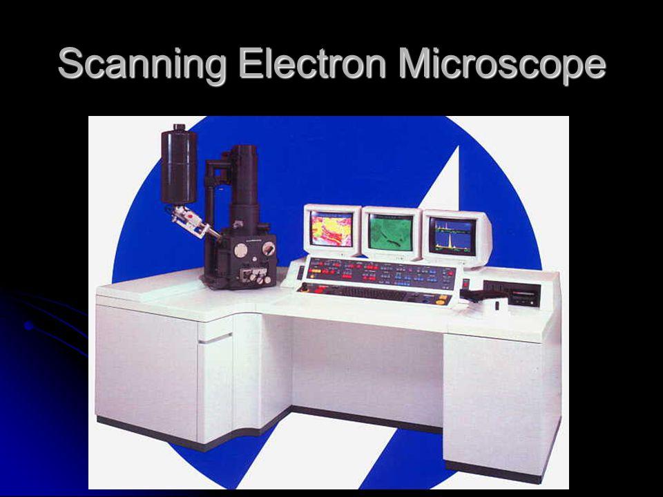 Scanning Electron Microscope