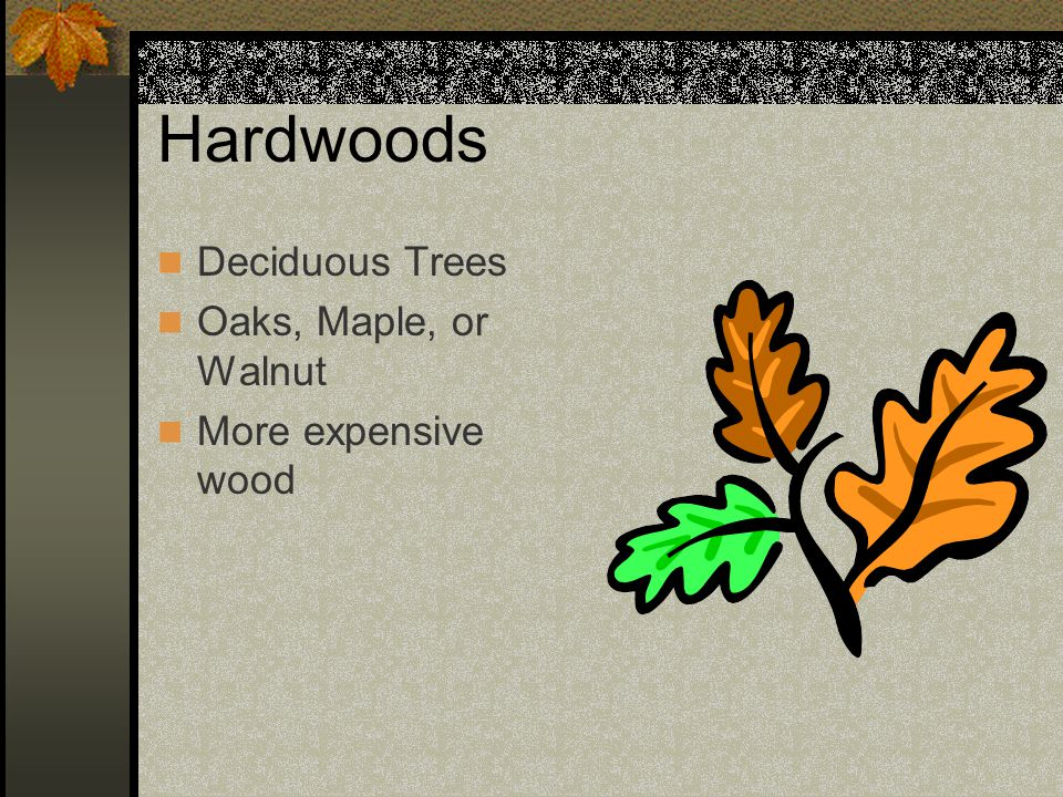 Hardwoods Deciduous Trees Oaks, Maple, or Walnut More expensive wood
