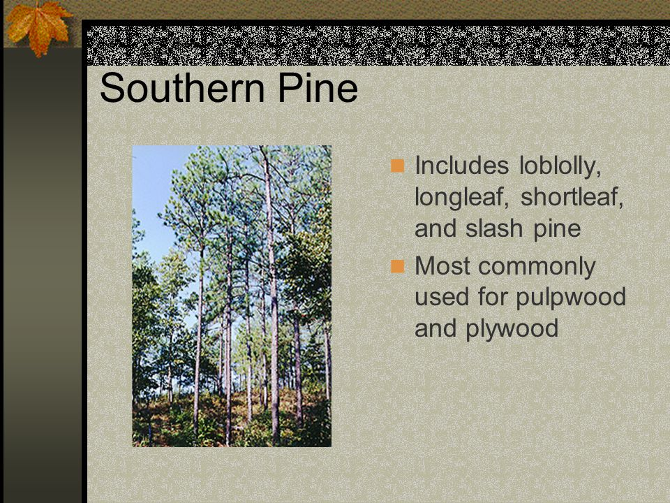 Southern Pine Includes loblolly, longleaf, shortleaf, and slash pine Most commonly used for pulpwood and plywood