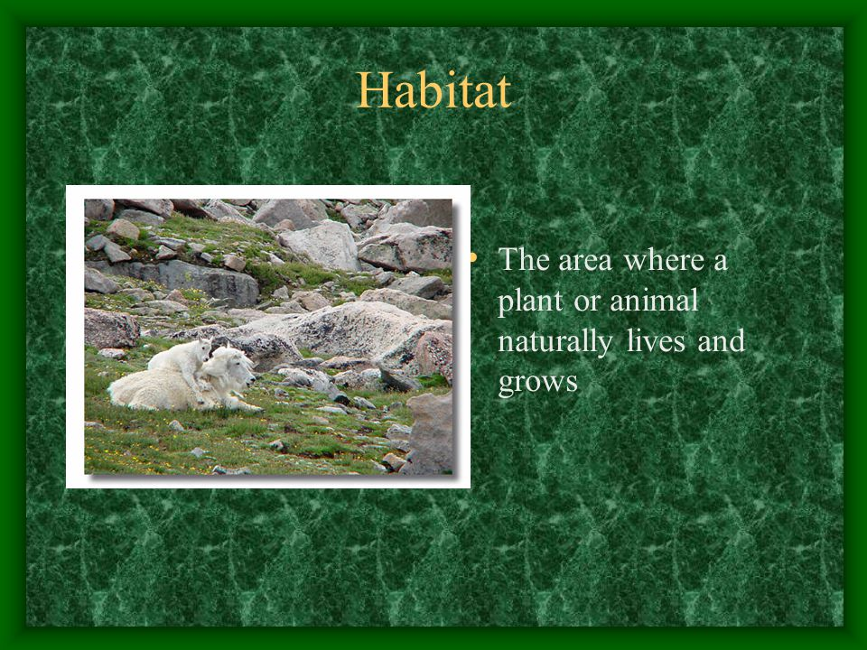 Cover Vegetation and other materials providing protection for wildlife