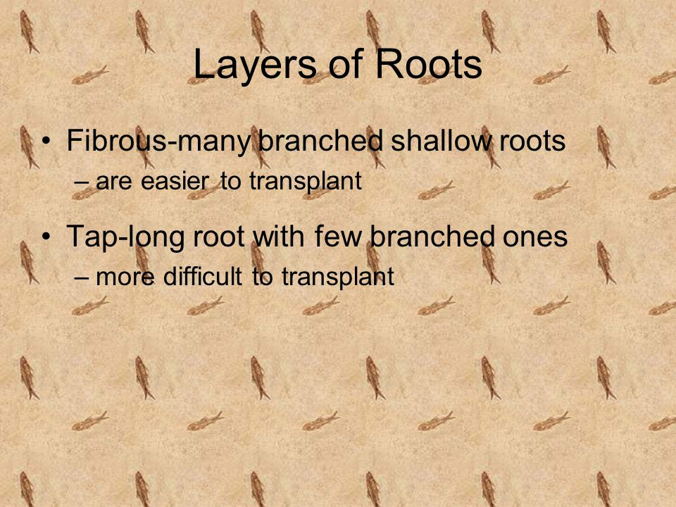 Roots-Internal Much like stems in that they have a phloem, cambium, and xylem layer Phloem-the outer layer that carries food down the root Xylem-the i