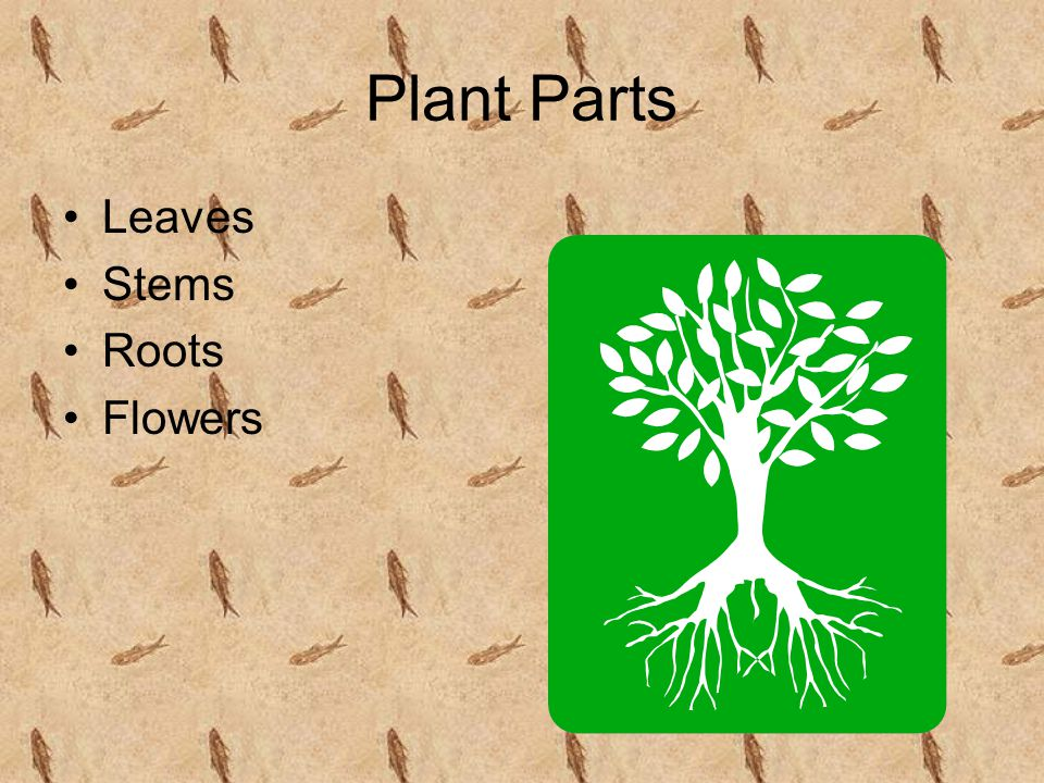Plant Parts Leaves Stems Roots Flowers