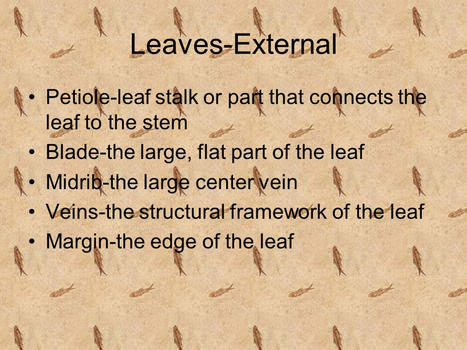 Leaves-External Petiole-leaf stalk or part that connects the leaf to the stem Blade-the large, flat part of the leaf Midrib-the large center vein Veins-the structural framework of the leaf Margin-the edge of the leaf