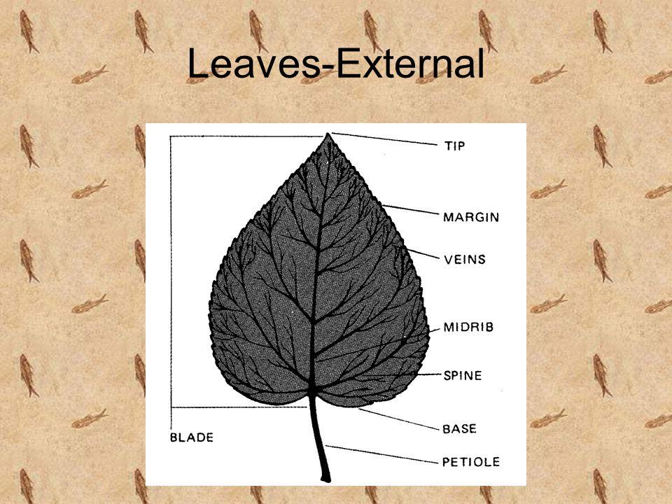 Leaves-External