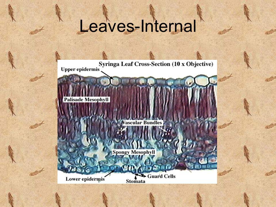 Leaves-Internal