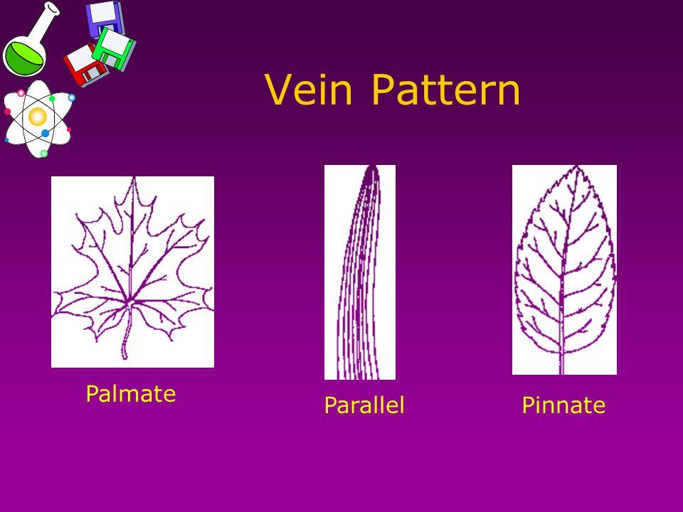 Vein Pattern Palmate ParallelPinnate