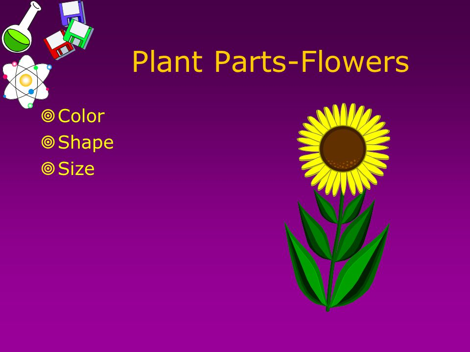 Plant Parts-Flowers  Color  Shape  Size