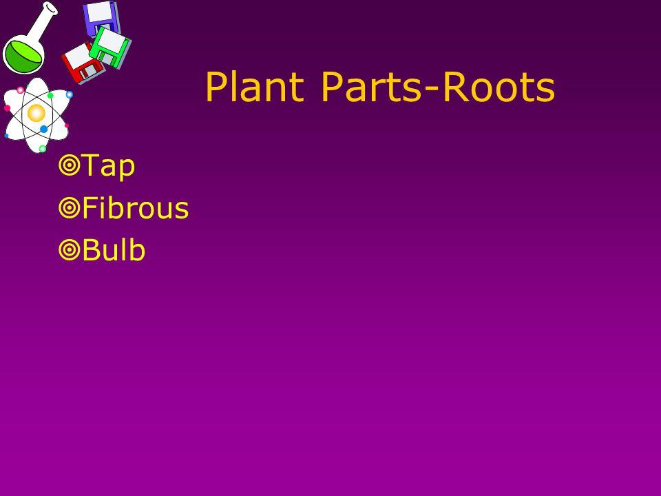 Plant Parts-Roots  Tap  Fibrous  Bulb