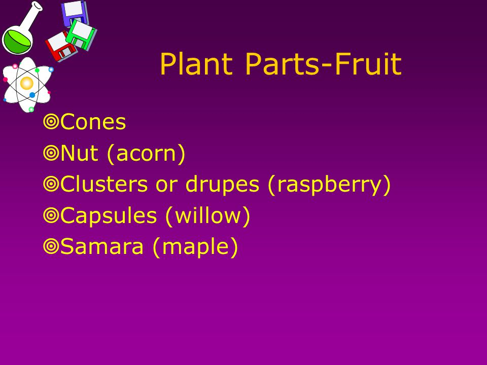 Plant Parts-Fruit  Cones  Nut (acorn)  Clusters or drupes (raspberry)  Capsules (willow)  Samara (maple)