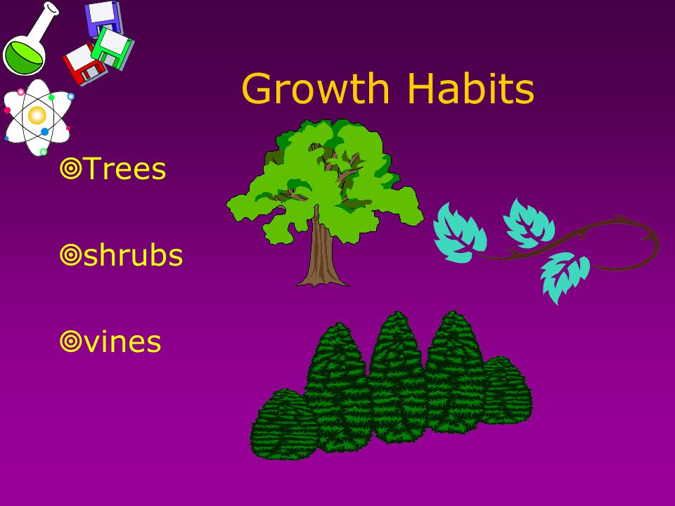 Growth Habits  Trees  shrubs  vines