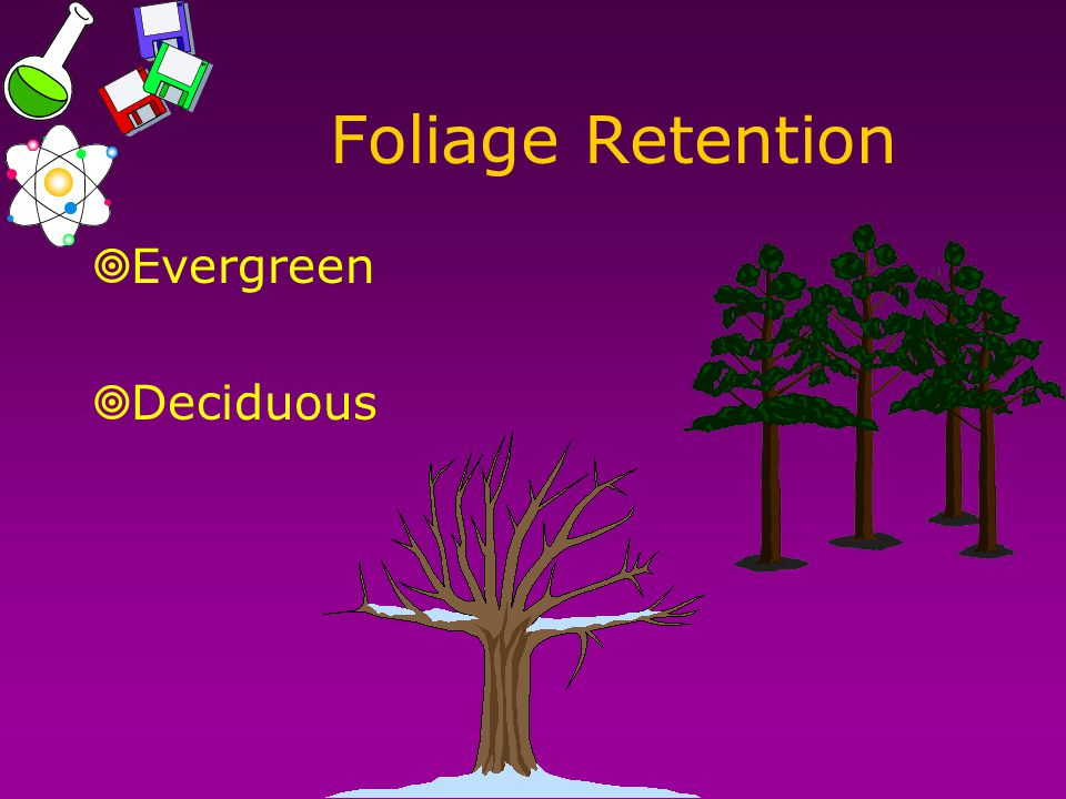Foliage Retention  Evergreen  Deciduous