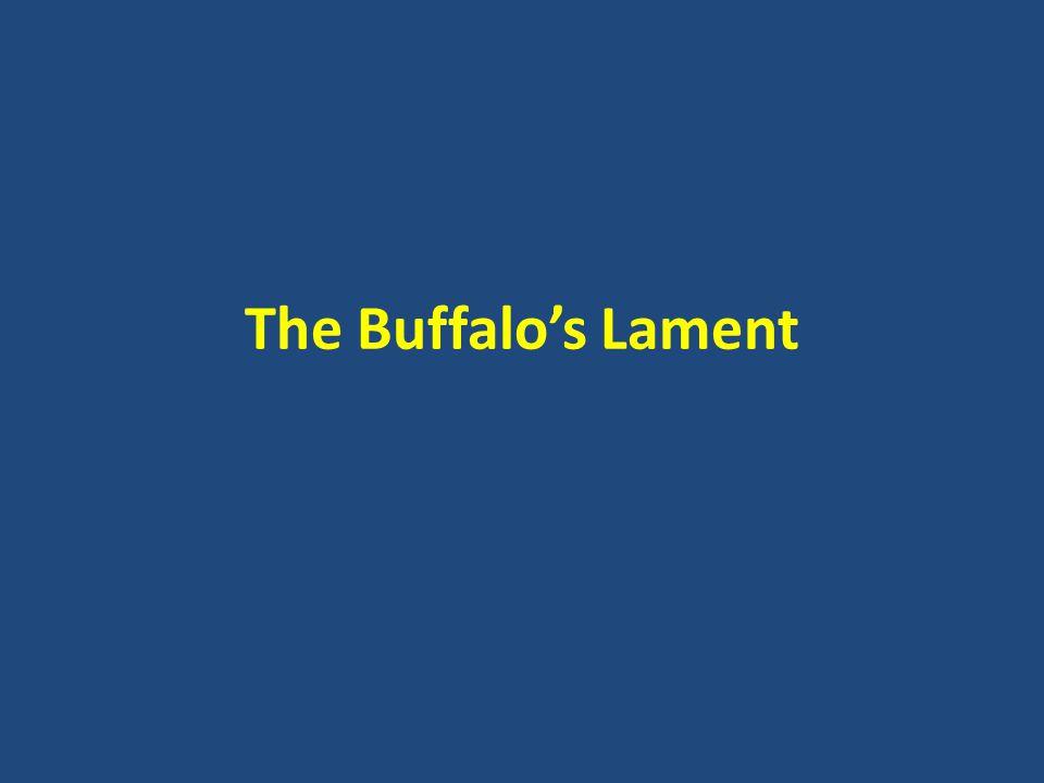 The Buffalo's Lament