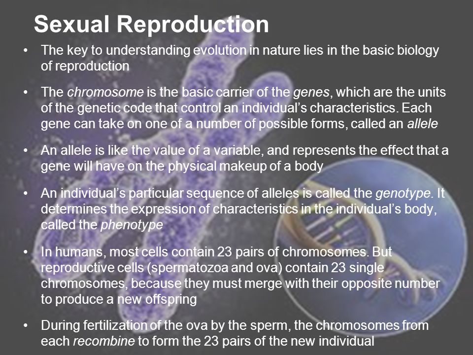 ICT2194 Sexual Reproduction The key to understanding evolution in nature lies in the basic biology of reproduction The chromosome is the basic carrier