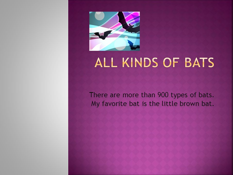 There are more than 900 types of bats. My favorite bat is the little brown bat.