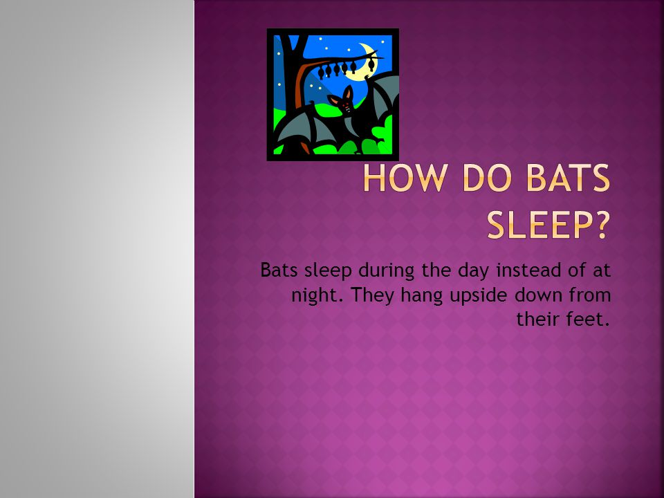 Bats sleep during the day instead of at night. They hang upside down from their feet.