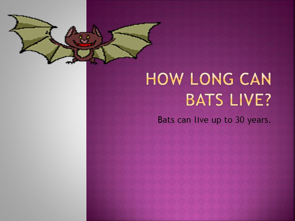 Bats can live up to 30 years.