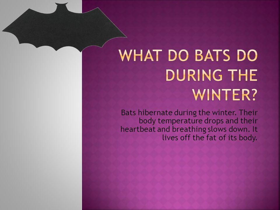 Bats hibernate during the winter.