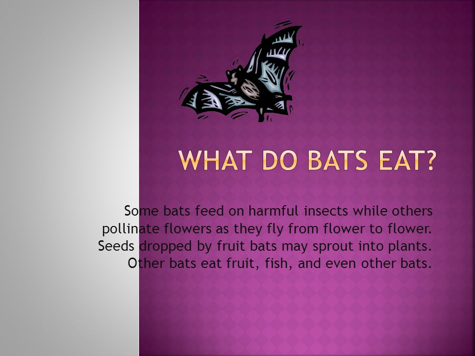 Some bats feed on harmful insects while others pollinate flowers as they fly from flower to flower.
