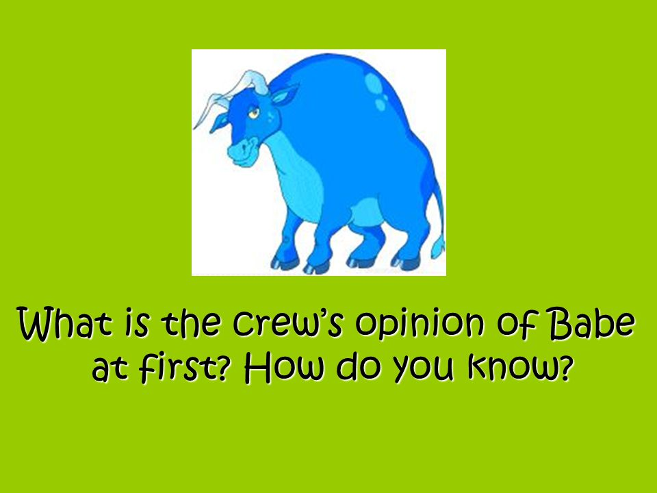 What is the crew's opinion of Babe at first? How do you know?