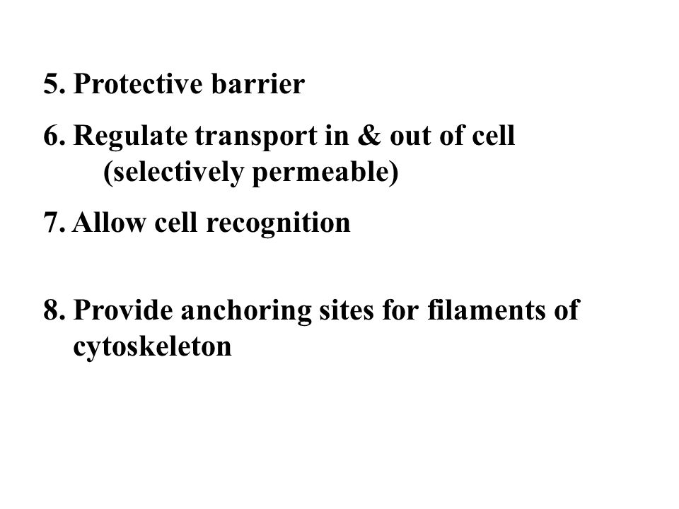 5. Protective barrier 6. Regulate transport in & out of cell (selectively permeable) 7. Allow cell recognition 8. Provide anchoring sites for filament