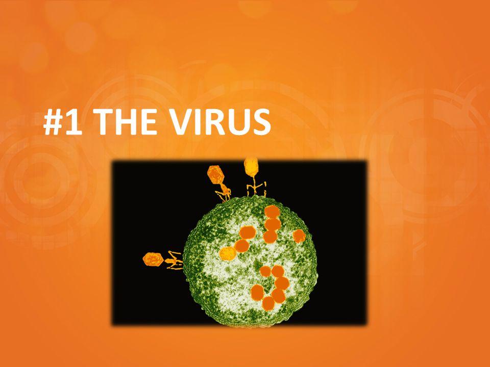 #1 THE VIRUS